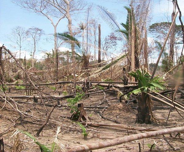 http://www.futura-sciences.com/uploads/tx_oxcsfutura/deforestation_amazonie.jpg