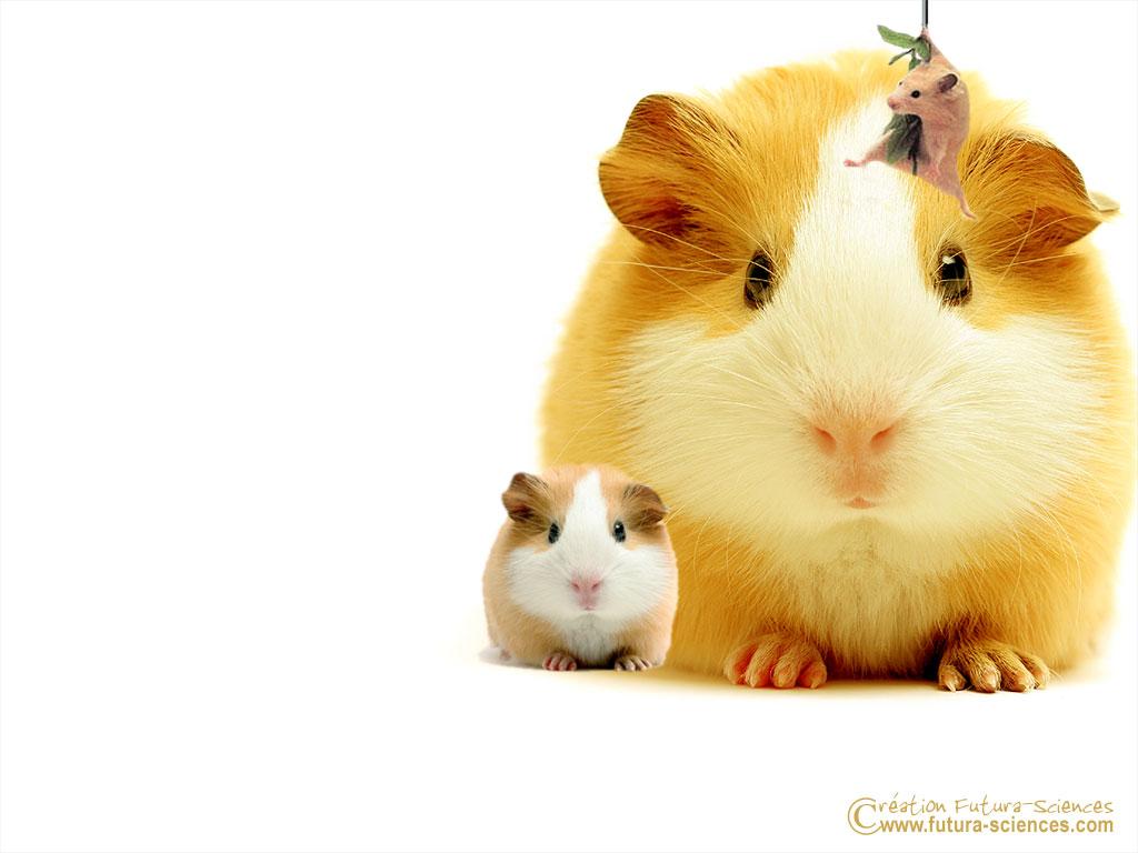 Hamster Gay - Porn Hub Sex